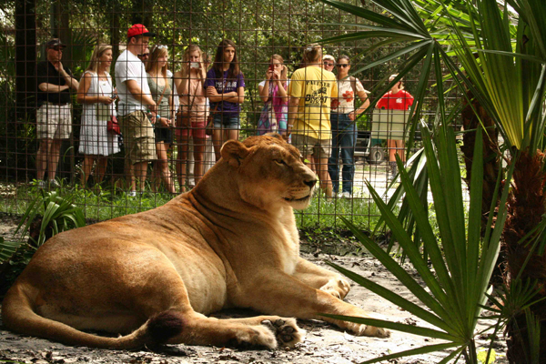 Big Cat Rescue in Tampa FL