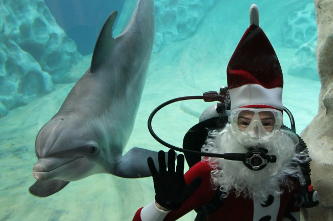 Check out the Festival of the SEAson at the Georgia Aquarium this month.