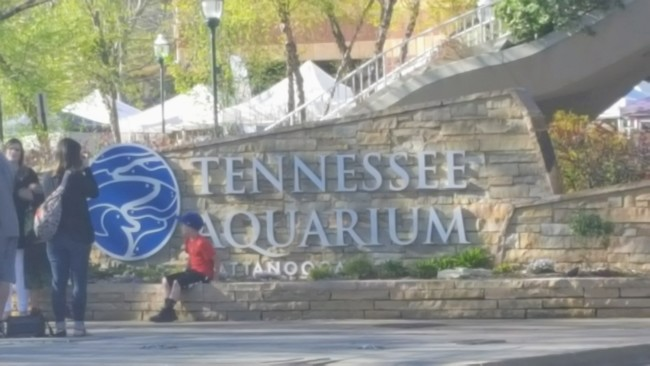 The Tennessee Aquarium is a must-go on the Trip.com Chattanooga weekend getaway list.