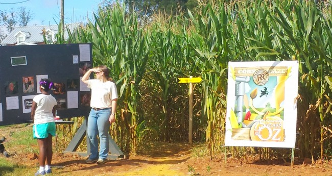 Corn maze at The Rock Ranch