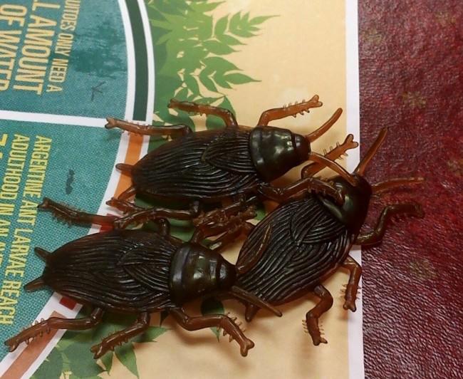 Orkin bugs